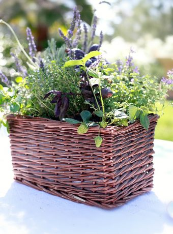 A beautiful miniature kitchen herb garden in a basket.