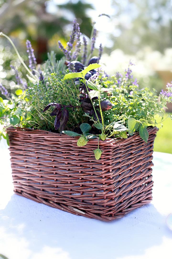 DIY Kitchen Herb Garden + Giveaway - Yummy Mummy Kitchen