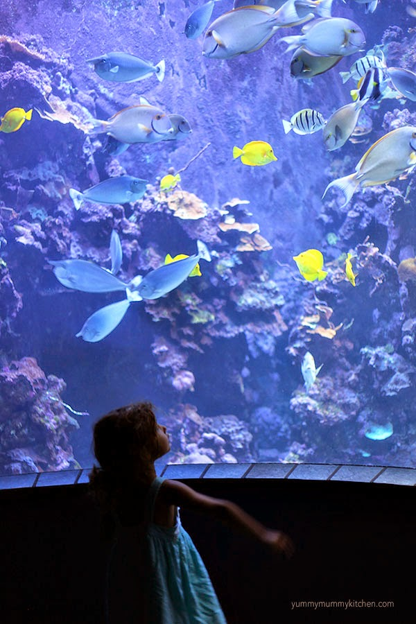 A little girl looks at the fish in the Maui Ocean Center