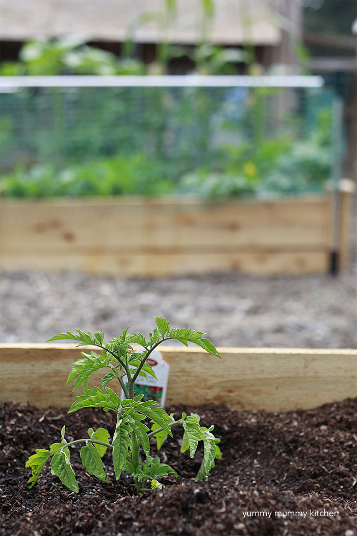 how to grow vegetables in raised garden beds