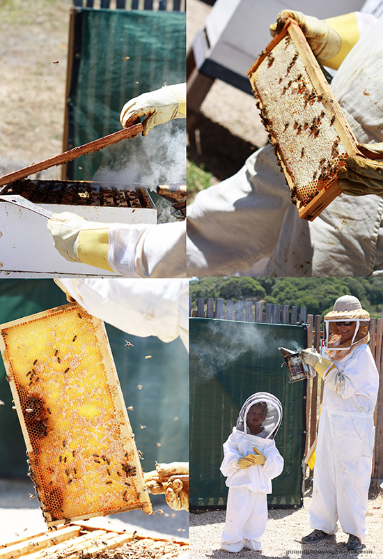 Beekeeper experience at Carmel Valley Ranch