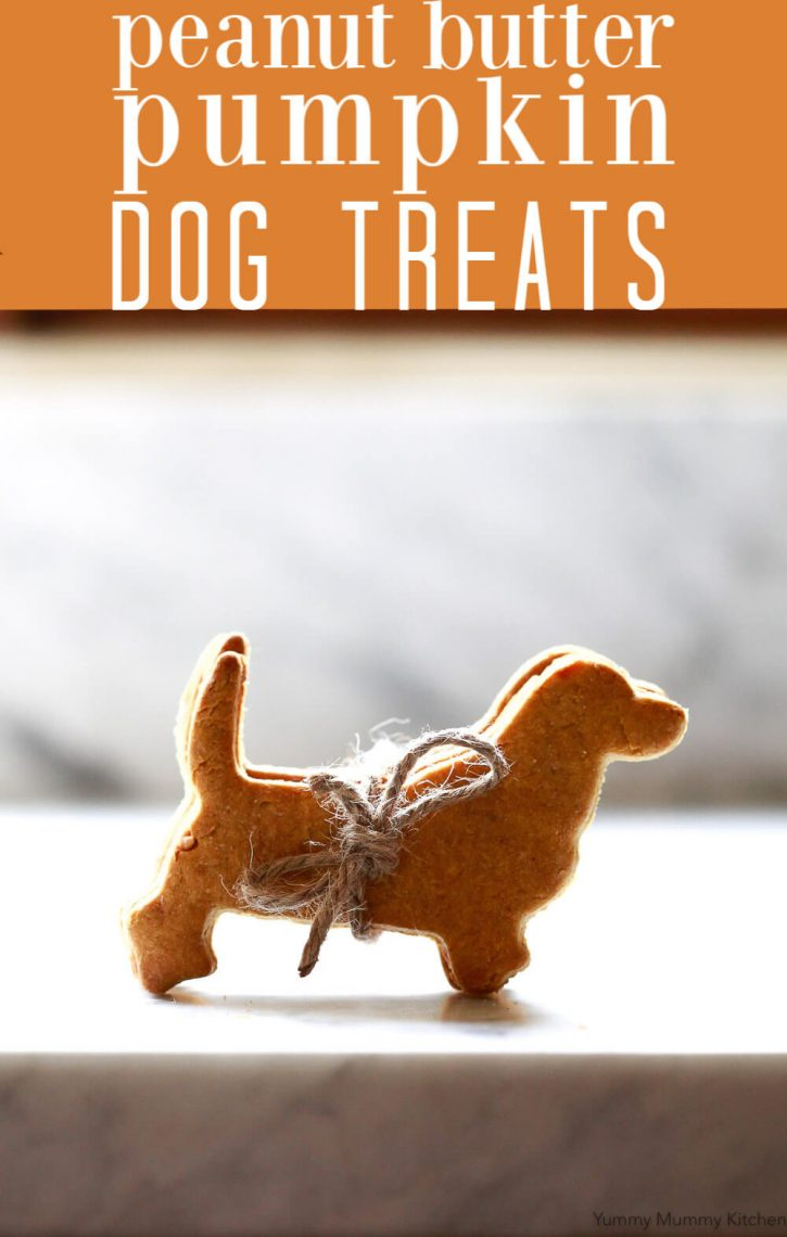 How to make homemade dog treats! Dogs love this easy homemade pumpkin peanut butter dog treat recipe! DIY dog treats are perfect for training or snacks.